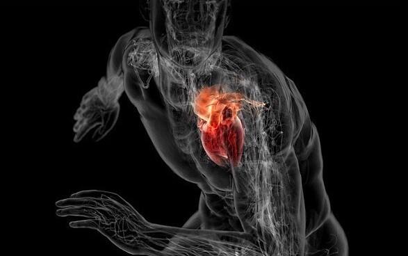 Сердце и его тренировка